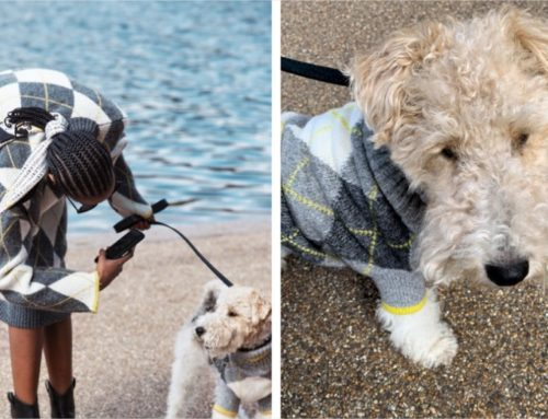 Cuando vas a juego con tu mascota – Pringle Of Scotland x H&M
